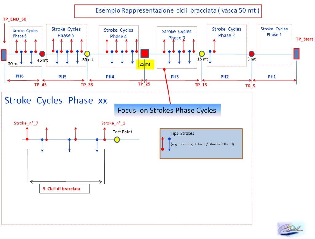 Esempio rappresentazione cicli braccita e time test points